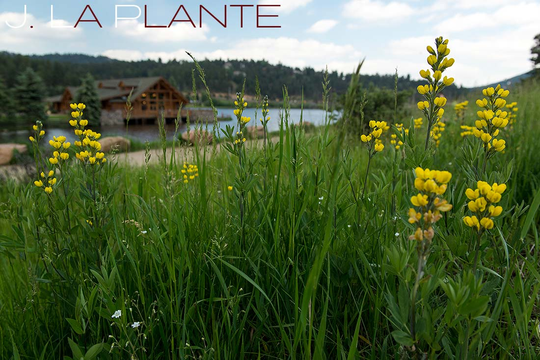 Lake house and flowers | Evergreen Lakehouse wedding | Evergreen wedding photographer | J La Plante Photo