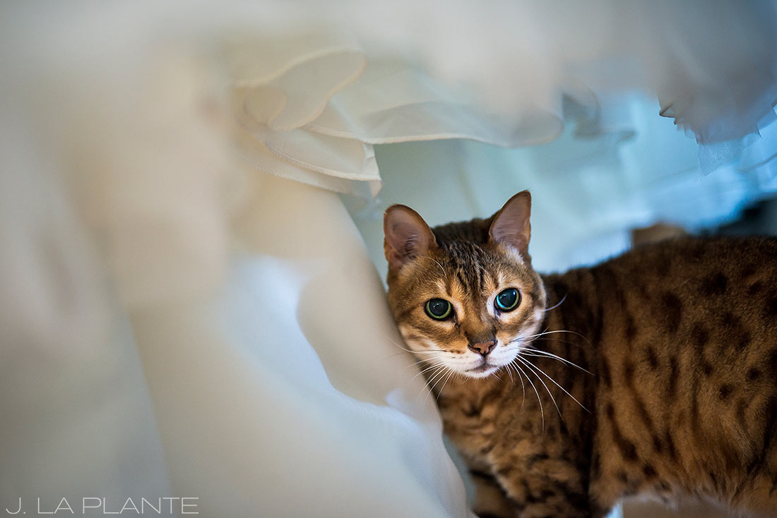 Seattle wedding | Cat with wedding dress | Seattle destination wedding photographer | J La Plante Photo