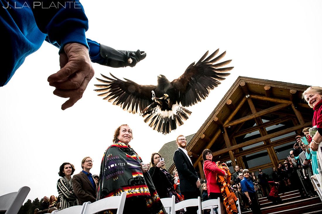 Hawk ring bearer   Evergreen Lake House Wedding   Evergreen Wedding Photographer   J. La Plante Photo