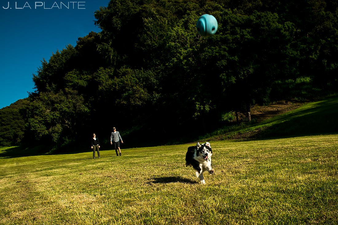 bay area tiny house lifestyle session bride and groom playing fetch with dog