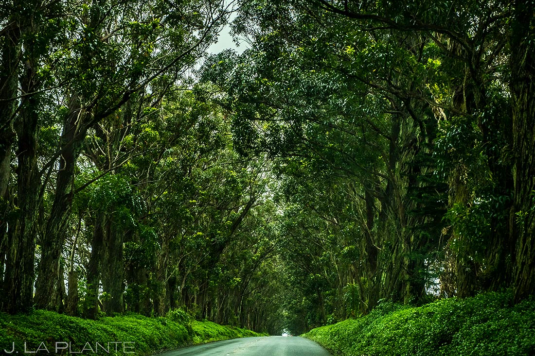 J. La Plante Photo | Travel Photography | Kauai | Tree Tunnel