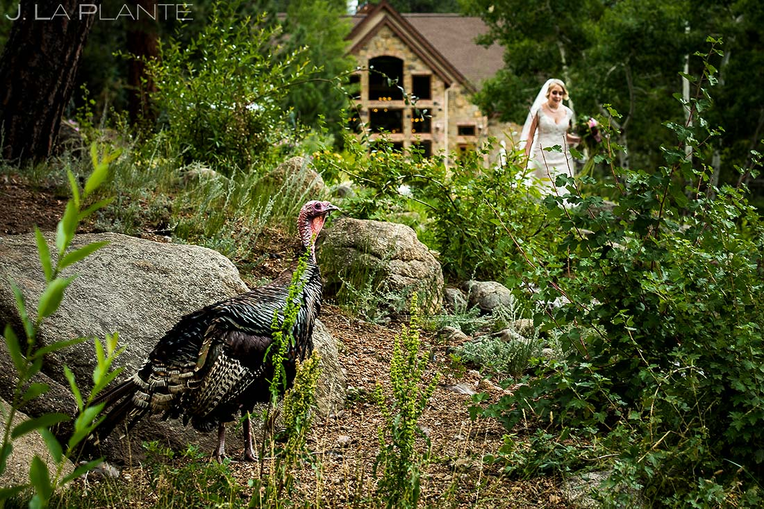 Outdoor Wedding Wildlife | Della Terra Wedding | Estes Park Wedding Photographer | J. La Plante Photo