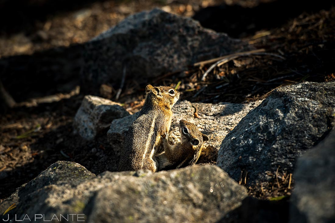 Wedding Day Chipmunks | Rocky Mountain National Park Wedding | Estes Park Wedding Photographer | J. La Plante Photo