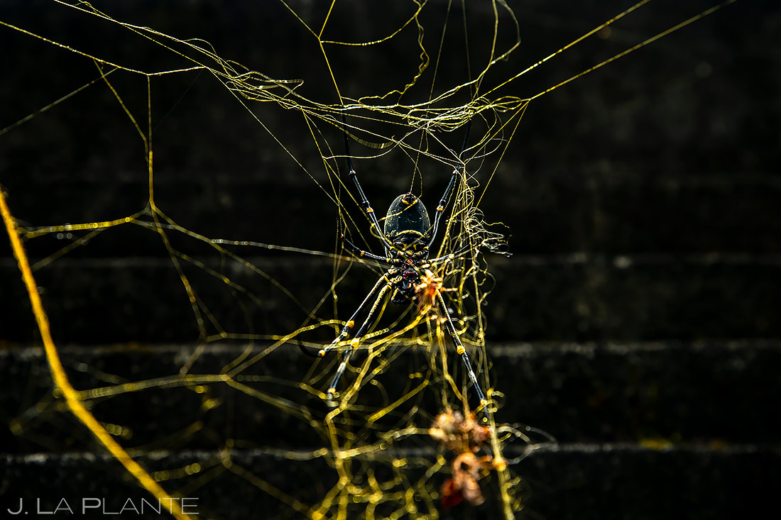 Golden Orb Spider | Bali Indonesia | Travel Photography | J. La Plante Photo