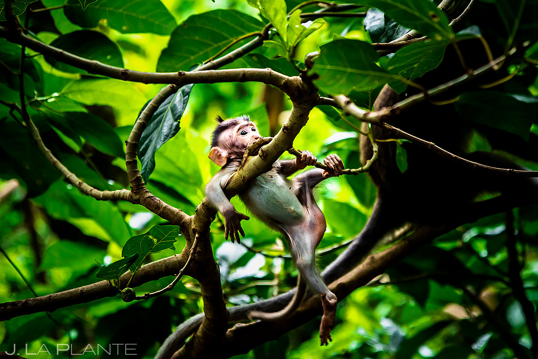 Ubud Sacred Monkey Forest Sanctuary | Bali Indonesia | Travel Photography | J. La Plante Photo