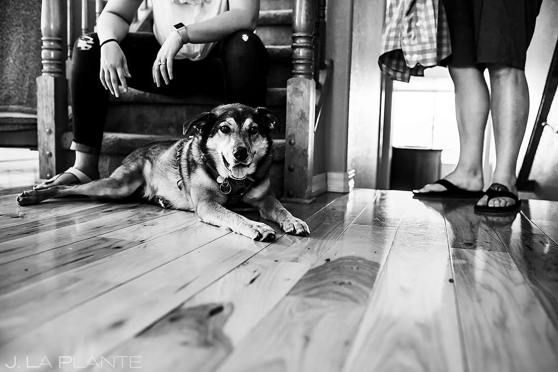 Couple With Dog | Denver Engagement | Denver Wedding Photographers | J. La Plante Photo