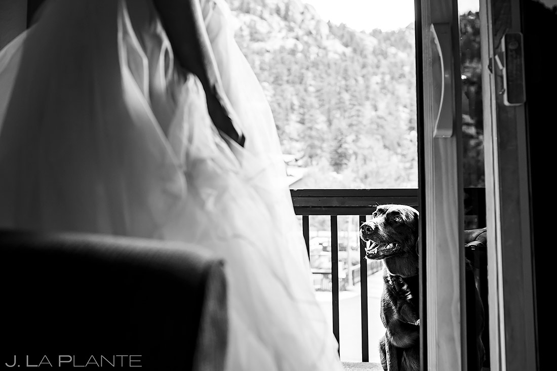Bride with Her Dog | 3M Curve Wedding | Rocky Mountain National Park Wedding Photographer | J. La Plante Photo