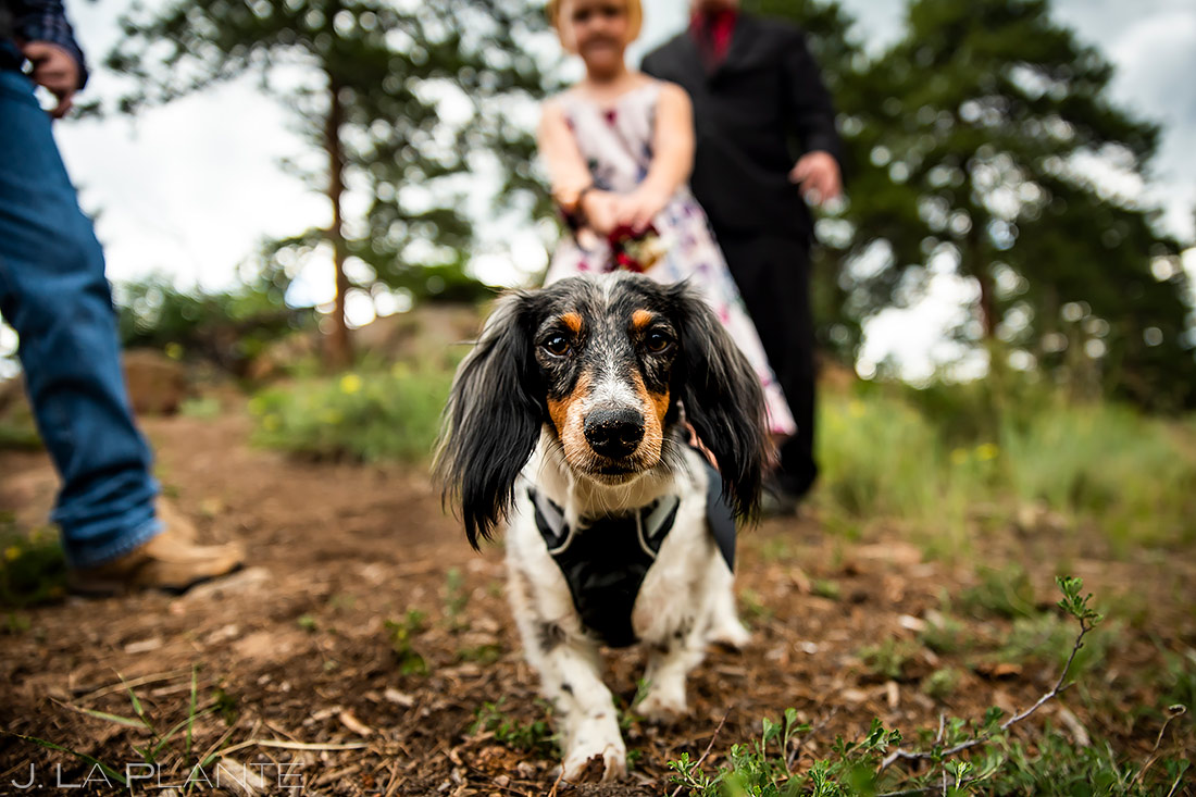 Funny Wedding Dogs | 3M Curve Wedding | Rocky Mountain National Park Wedding Photographer | J. La Plante Photo