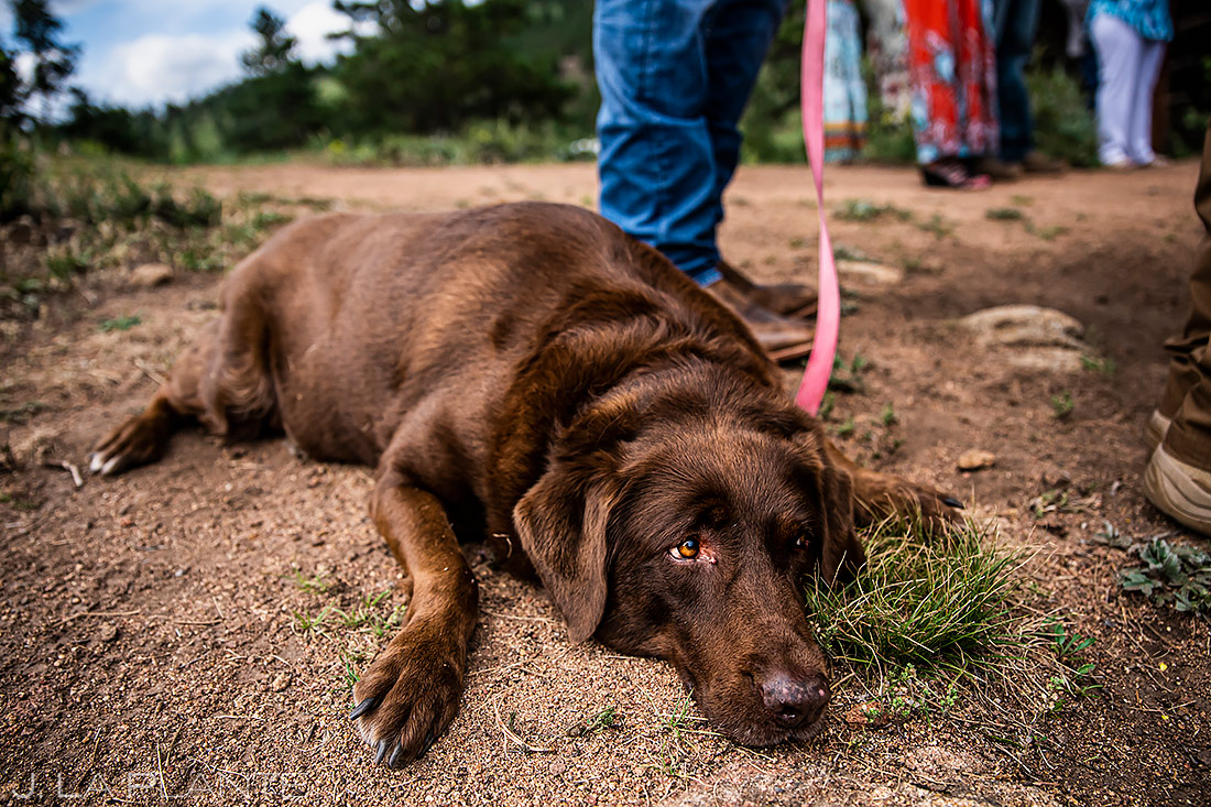 Dogs at Weddings | 3M Curve Wedding | Rocky Mountain National Park Wedding Photographer | J. La Plante Photo