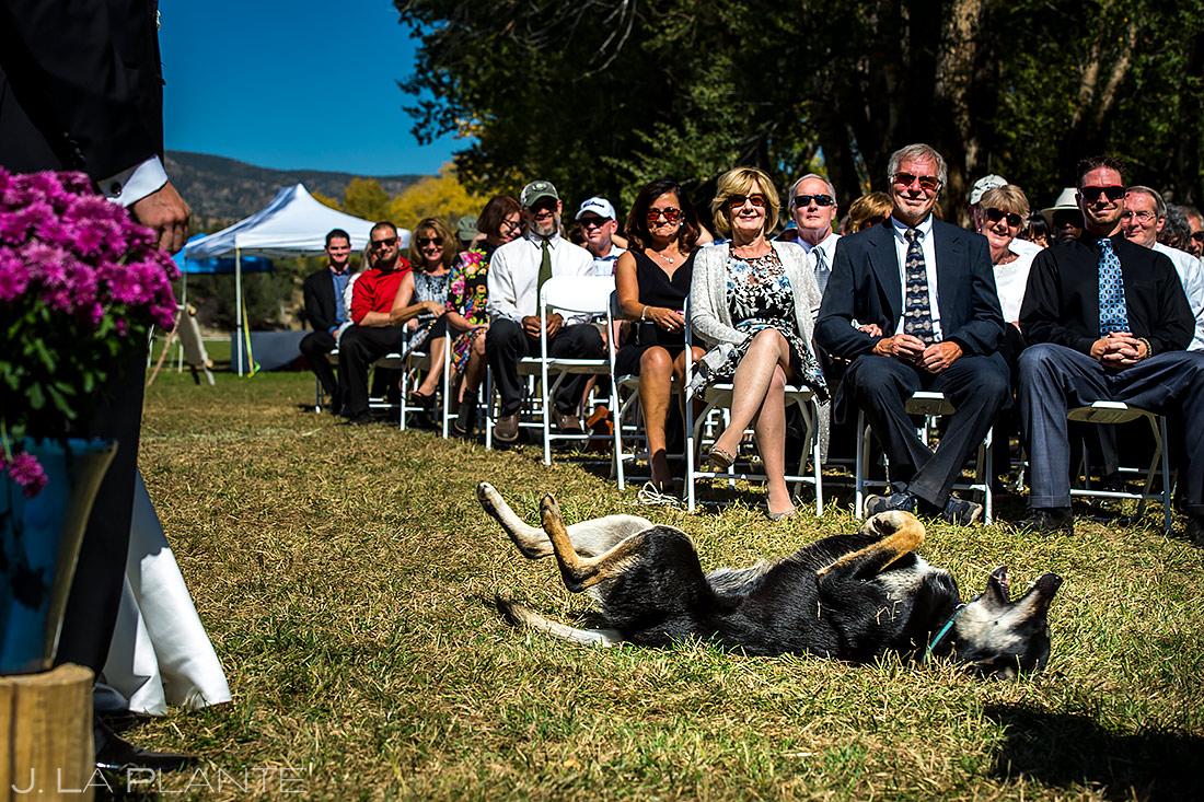 Dogs at Weddings | Buena Vista Colorado Wedding | Colorado Wedding Photographer | J. La Plante Photo