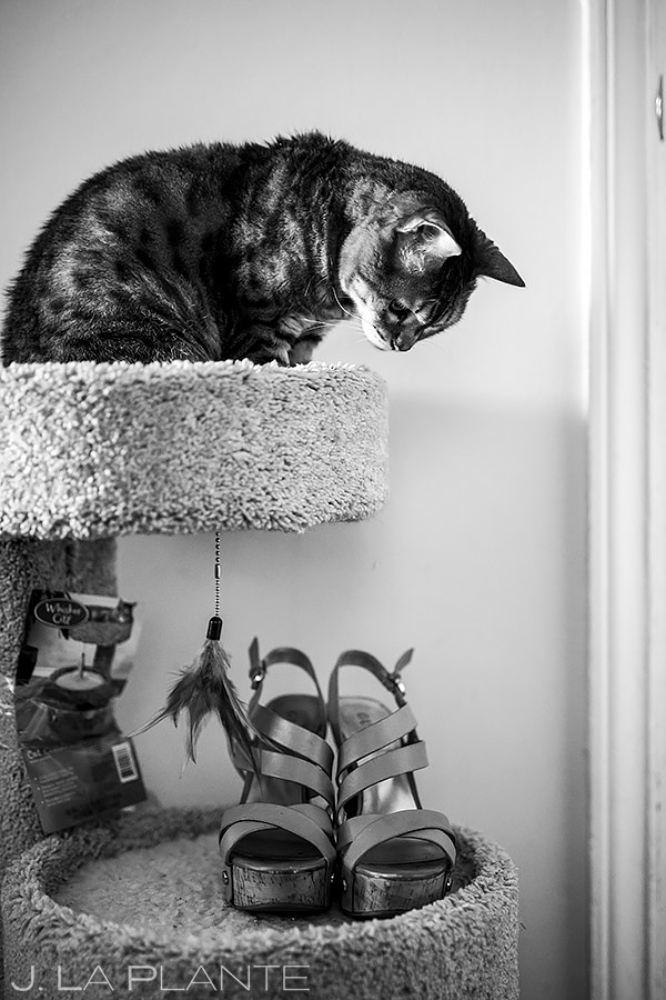Cats at Weddings | Seattle Wedding | Destination Wedding Photographer | J. La Plante Photo