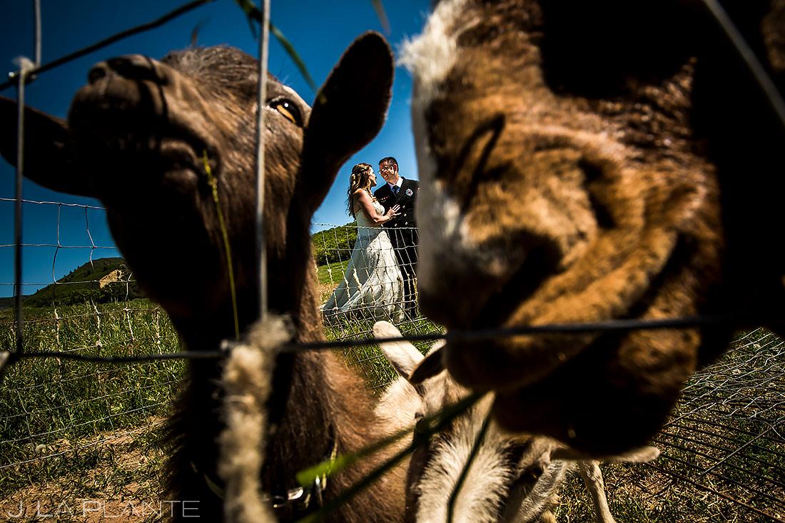 Bride and Groom with Farm Animals | White Owl Ranch Wedding | Colorado Wedding Photographer | J. La Plante Photo