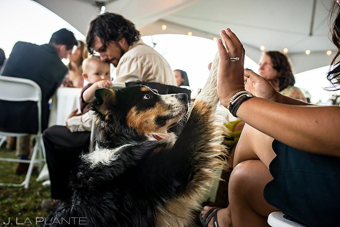 Dog High Fiving Wedding Guest | Buena Vista Colorado Wedding | Colorado Wedding Photographer | J. La Plante Photo