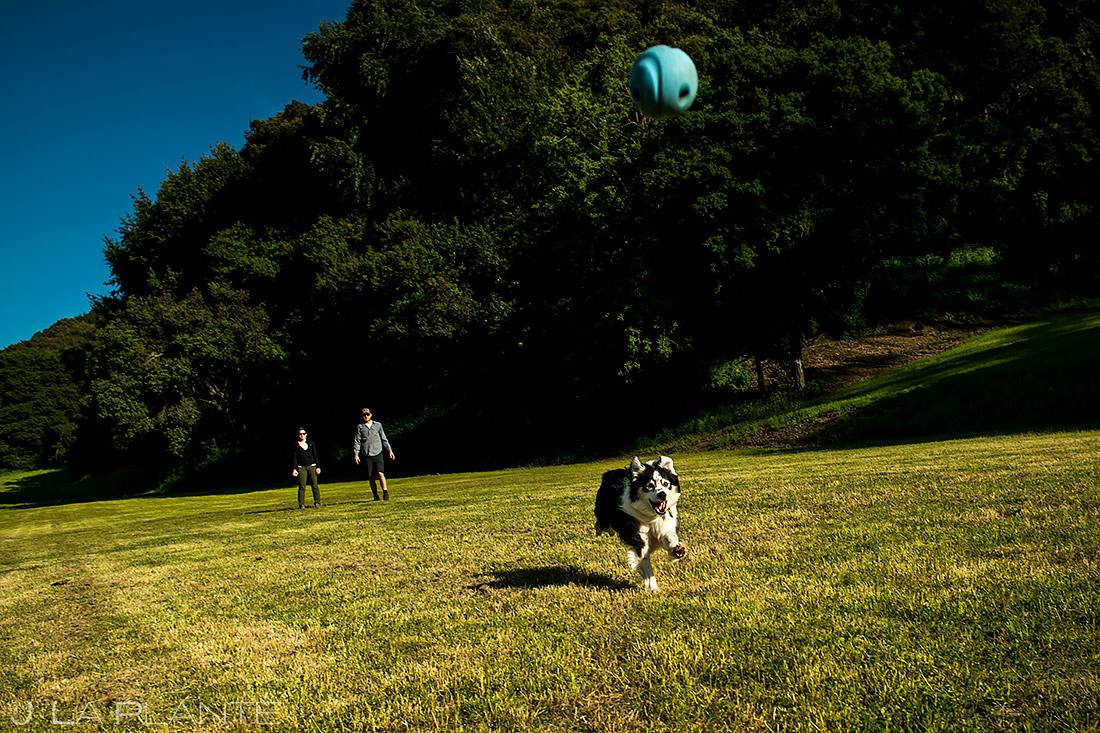 how to include your pets in your wedding | San Francisco Engagement | San Francisco Wedding Photographer | J. La Plante Photo